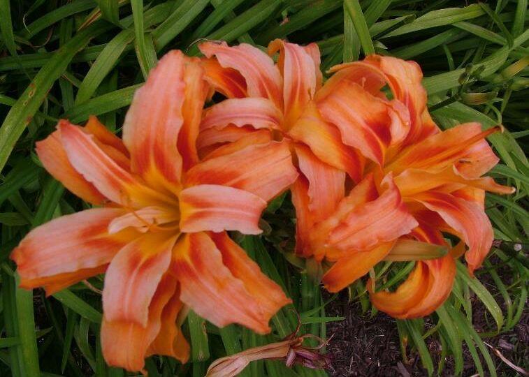 June gardens 2