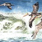 june waterfowl art